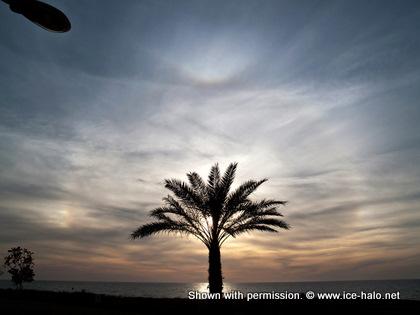 гало и пальма, радужный круг гало вокруг пальмы